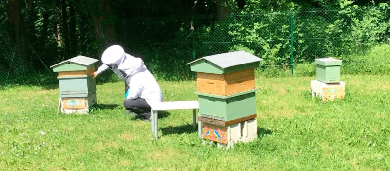 Des ruches au Campus !